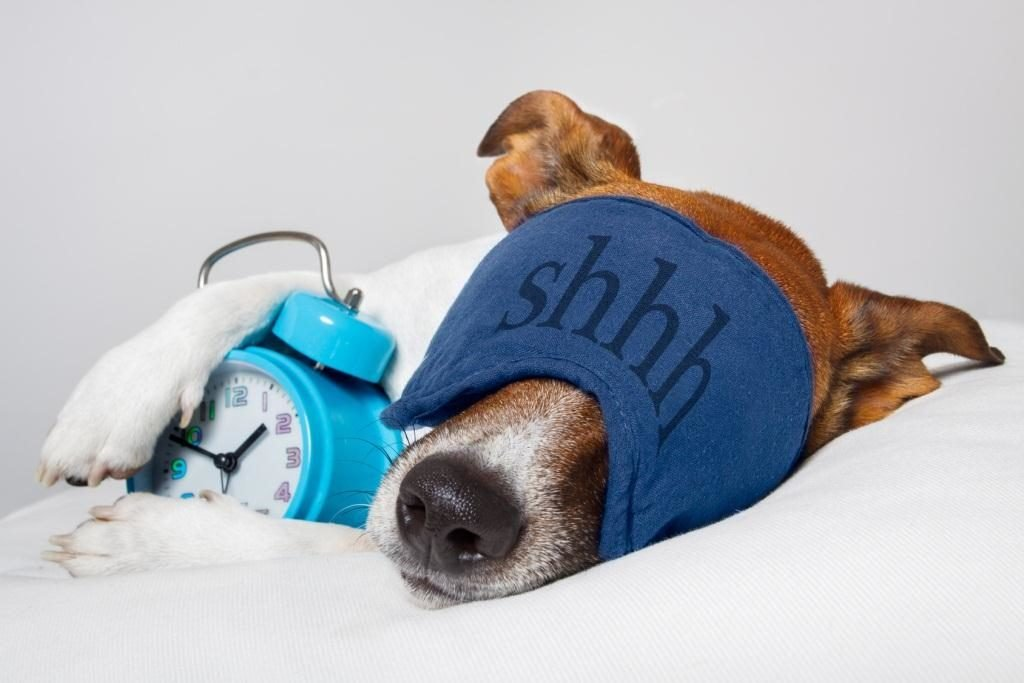 dog_with_alarm_clock2