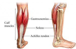 achilles-tendon-300x195